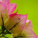 జనవరి 2013 సంచిక: మాట్లాడుకుందాం రండి!