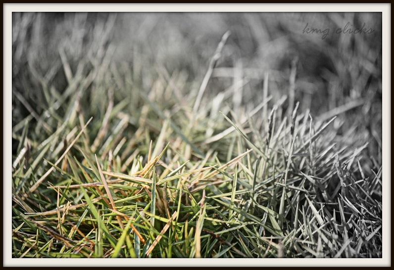 The GRASS BLADE